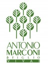 Antonio Marconi